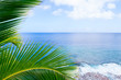 Tropical scene palm trees and fronds swaying in breeze over ocean distant horizon and sky.