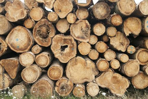 Timber logs - 161935078