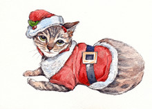 Christmas Cat Sitting