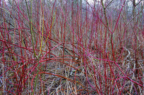 Photo  Woven branches bush, expressionism, Jackson Pollock