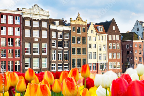 Photo  Icon of Holland traditional old buildings and tulip flowers in Amsterdam, Nether