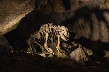 Enlightened Skeleton Of The Be...