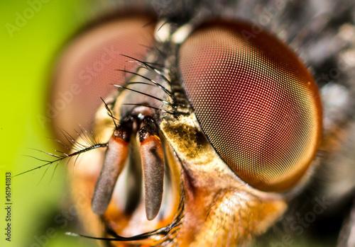 In de dag Macrofotografie Portrait of a fly in nature.