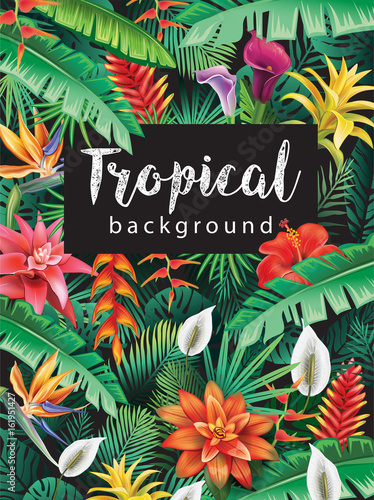 Background from tropical flowers Wall mural