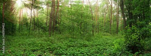 Valokuva  green forest