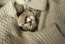 Cat Sleeps With A Paw Across H...