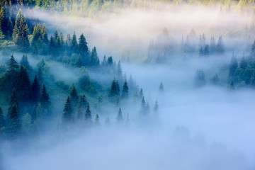 Fototapeta Mgła Foggy Landscape in Mountains. Beautiful morning landscape with trees in the fog.