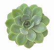 Close-up Rectangular arrangement of succulents, cactus succulent in a planter, white isolated background
