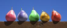 Multicolored Pears