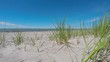 Beachgrass on beach