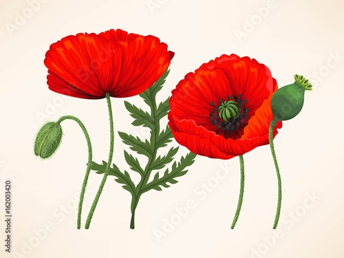 Foto op Aluminium Pixel Set of poppies