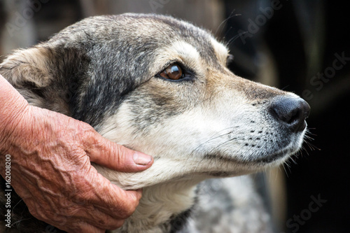 Foto  Portrait of a dog mongrel with the hand of the owner