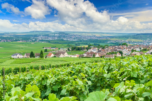 Tuinposter Lime groen Scenic landscape in the Champagne, Vineyards in the Montagne de Reims, France