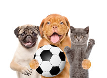 Group Of Pets With Soccer Ball. Isolated On White Background