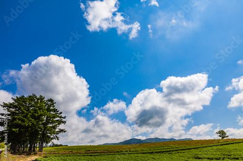 夏の田園風景