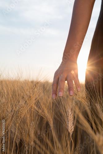 Fotografie, Obraz Ragazza sta accarezzando delle spighe di grano in un campo al tramonto