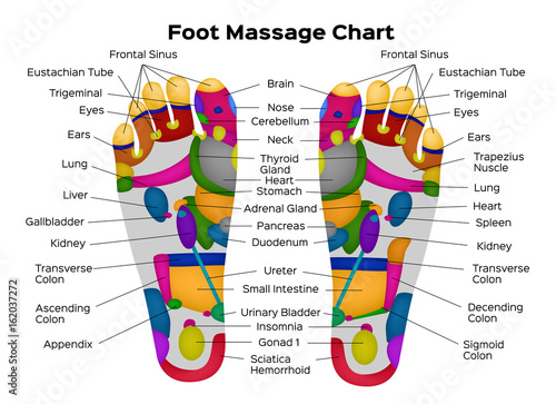 Foot Reflexology Chart With Description Of The Internal Organs And