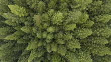 Aerial View Of Trees And Road ...