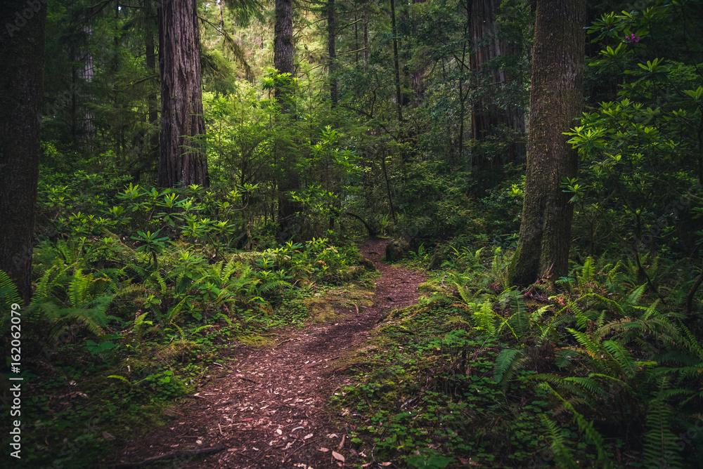 Fototapety, obrazy: Lush forest trail.