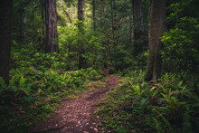 Lush Forest Trail.