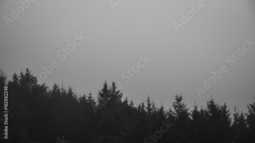 Foto op Plexiglas Donkergrijs Black and white forest in fog.