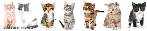 Valokuvatapetti Collage of cute kittens on white background