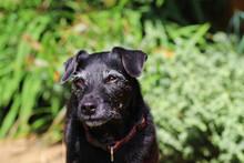 Senior Healthy Contented Dog