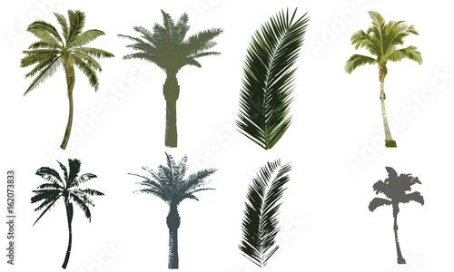Fotografiet  Set di palme