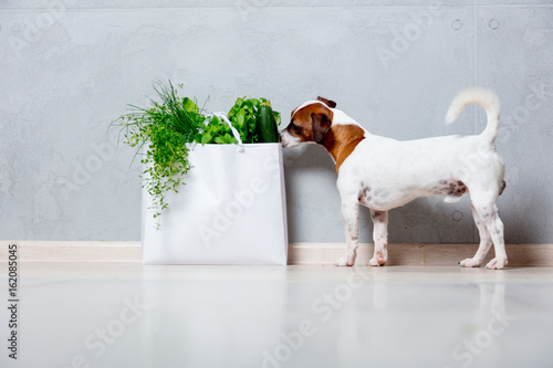 dog near bag with vagetables