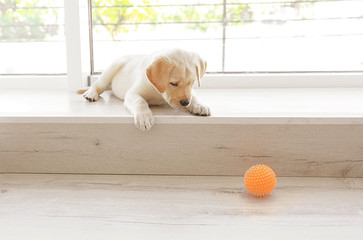 Cute labrador retriever puppy lying on window sill at home
