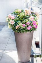 Beautiful Patio Pot With Floral Arrangements: Roses, Petunias And Verbenas Flowers On Balcony Or Terrace. Urban Container Planter Gardening