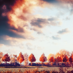 Fototapeta Beautiful autumn landscape with trees, field and sky. Fall outdoor nature background