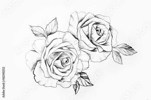 Photo  Sketch of a branch of beautiful roses on a white background.
