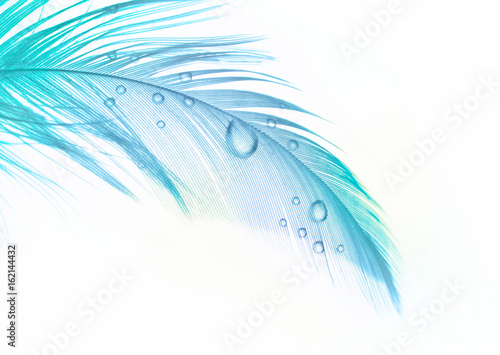 Beautiful turquoise and blue feather bird with water drops isolated on white background.