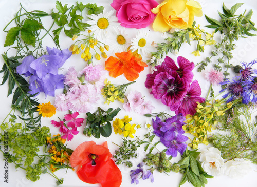 Fotografie, Obraz  Edible flowers collection isolated on white background. Top view
