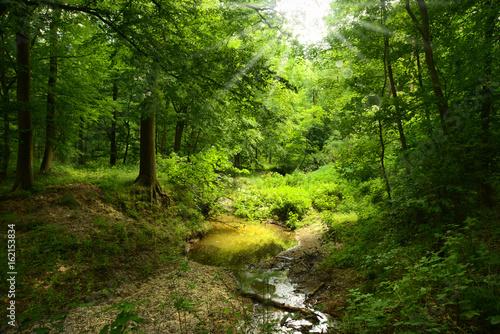 nieduzy-strumien-plynacy-w-pieknym-zielonym-lesie