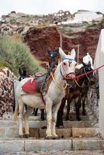 Santorini Donkeys On The Steps...