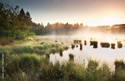 Fotografia summer sunrise over wild swamp