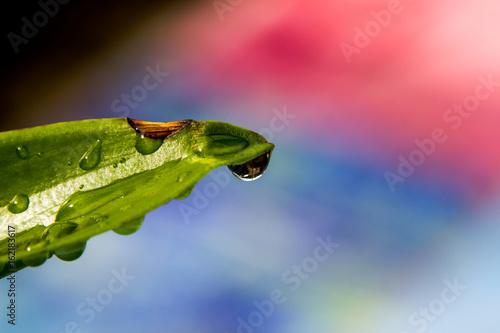 green leaf stame