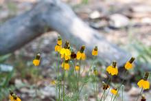 Yellow Wildflower Dancers