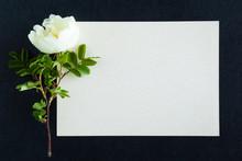 White Rose On The Dark Background. Fresh Flowers. Condolence Card.