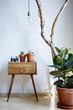 urban loft decoration gum tree cacti cabinet branch sunny atmosphere