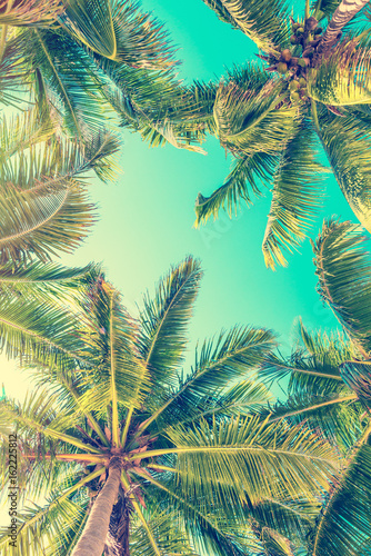 Fototapeten Bekannte Orte in Amerika Blue sky and palm trees view from below