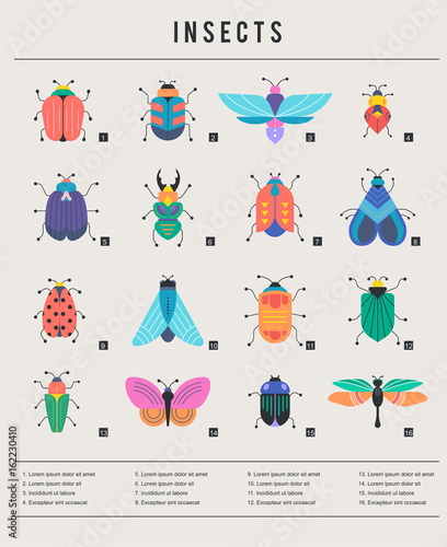 Fotografía  Bugs, insects, Butterfly, ladybug, beetle, swallowtail, dragonfly collection