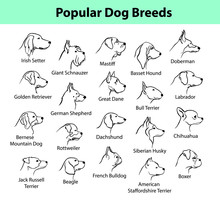 Dogs Breeds Outline Portraits,...