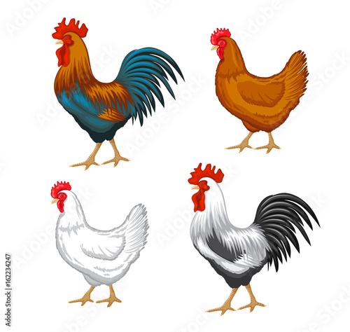 Stampa su Tela Chickens set vector illustration in Color