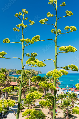 Fotografie, Obraz  Trees and sea of Calabria, Italy