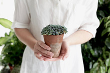 Woman Holding Potted Succulent Plant