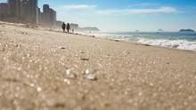 Tiny Jellyfish On The Beach - ...