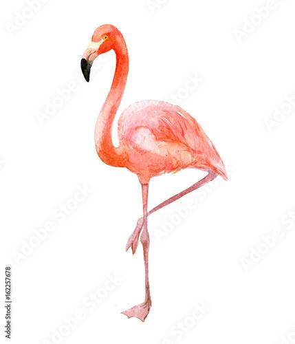 rozowy-flaming-na-bialym-tle-z-noga-podniesiona-do-gory-rysunek-akwarela